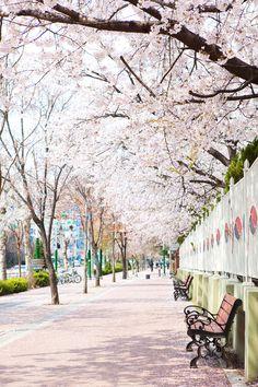 #spring #photo #iclickart #npine