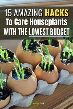 These intricate hacks are perfect for beginners who want to try something new without any of the risks typically associated with gardening indoors. #gardeninghacks #gardenhacks Plant Care, Houseplants, Lowes, Gardening Tips, Budgeting, Things To Come, Amazing, Sugar, Snacks