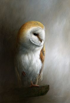 All images are the original artwork of nature artist and wildlife artist Dr. Jeremy Paul and are protected by international copyright laws. Owl Bird, Bird Art, Pet Birds, Owl Photos, Beautiful Owl, Animal Totems, Wildlife Art, Wildlife Paintings, Birds Of Prey