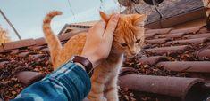 Kattförsäkring - Jämför kattförsäkringar! Så hittar du billigaste pris och villkor på försäkringar för din katt. Det här bör du tänka på för att ha ett bra skydd när olyckan är framme. Viktigt att tänka på