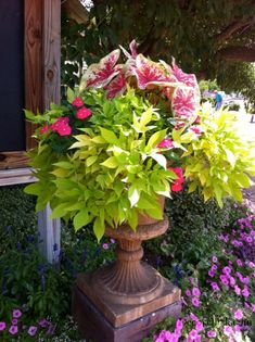 I ought to try this pot combo - Caladium, New Guinea impatients (love that color!) and Caroline sweet potatoe vine!  Awesome!