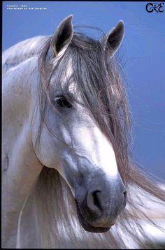 Cavalos de raça e esporte<.Em sintonia com o mundo equestre.> - UOL Fotoblog