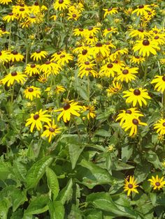Want to solve your family history mystery? Long Branch Beach, Bring Them Home, Mystery Of History, Black Eyed Susan, Breath Of Fresh Air, Garden Photos, Native Plants, Family History, Sunflowers