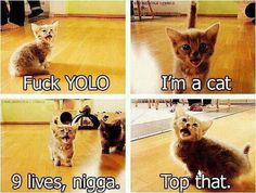 Yolo cat Pinned From Junglegag - Click for more!