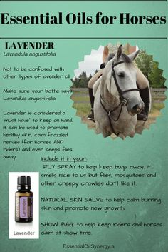 Ever wonder how to use essential oils into your horse's routine? Well… now you know.