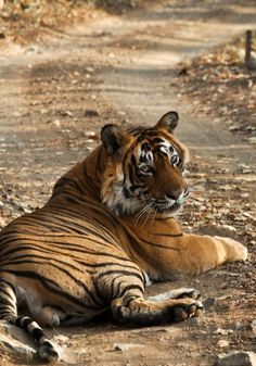 MAGICAL JUNGLE OF RANTHAMBORE There is something romantic, intriguing, almost magical about the place. #EarthSongBlog #VanVaibhav