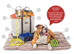 We gathered everything you need to take your dog to the beach!