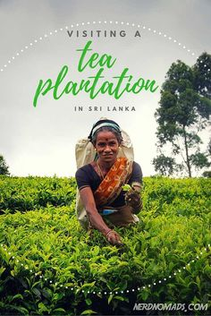 Would You Like A Cup of Sri Lankan Tea? The Sri Lankan tea is also called Ceylon Tea. We visited a tea plantation in Ella, Sri Lanka, and learned about all the benefits from drinking tea.