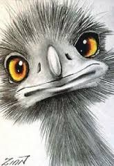 emu drawing for kids ; Birds Painting, Pelican Art, Art Painting, Drawings, Whimsical Art, Art, Emus Art, Rock Art, Bird Art