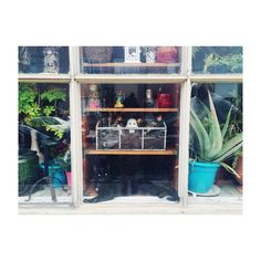 Spot the kitteh! Spot the patient boyfriend! Spot the creepy doll head! 🐈🌵🙇🏻👶🏻 #cat #catsofinstagram #window #eclectic #decor #cactus #aloevera #minimalist #travel #explore #philadelphia #pennsylvania #usa #america