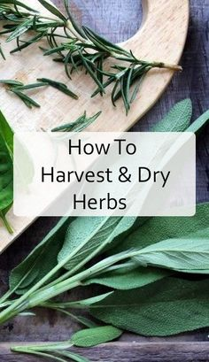 How To Harvest And Dry Herbs I remember how I felt when I first started growing and harvesting herbs Gardening Books, Container Gardening, Gardening Tips, Indoor Gardening, Vegetable Gardening, Healing Herbs, Medicinal Herbs, Garden Pests, Herbs Garden