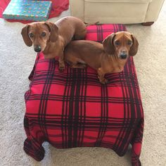 "We call the ottoman, ""puppy island""..."