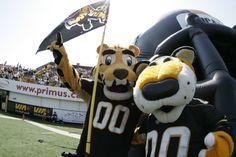 Stripes (left) and TC, Hamilton Tiger-Cats mascots. Canadian Football League, American Football, Kitty Games, Sports Teams, Hamilton, Toronto, Nfl, Canada, Stripes
