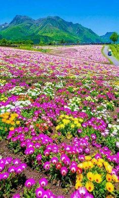 Beautiful Landscape of Nature Beautiful Roses, Beautiful Gardens, Beautiful Places, Beautiful Nature Wallpaper, Beautiful Landscapes, Flowers Nature, Wild Flowers, Landscaping On A Hill, Nature Scenes