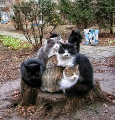 Meeting Place     #Cats