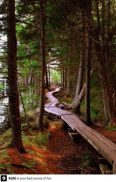 Forest Bike Trail, Oregon