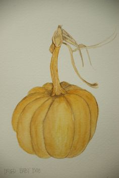 Botanical Watercolor Dried Baby Pumpkin by ThePreeningCrow. Sold