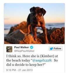 """pw twitter post """" I think so. here she is (Kimber) at the beach today. @angel1228: So did u decide to keep her?"""" The Furious, Fast And Furious, Paul Walker Young, Paul Walker Quotes, Beautiful Blue Eyes, Thanks For The Memories, Angels In Heaven, People Like, Stuff To Do"""