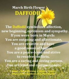 Daffodil – Flower of the month for March March Baby, March Month, Hello March, 13 March, Daffodil Tattoo, Daffodil Flower, March Birth Flowers, March Pisces, Birthday Month Flowers