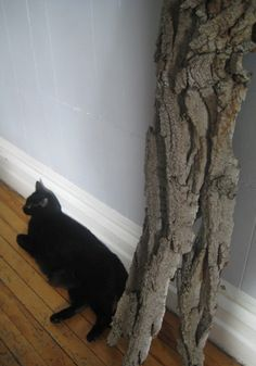 A Purrfect Natural Cat-Scratching Post