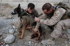 Seal Team 6 Dog-All dogs are special, but these guys are in a complete category all by themselves.