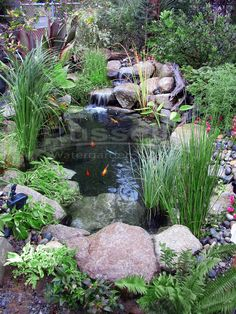 Create beautiful water garden ponds, hybrid ponds, and crossover ponds with the easy to clean Ahi Hydro™ Vortex waterfall small pond filter.
