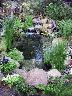 Create beautiful water garden ponds
