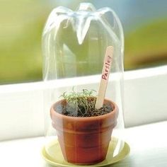 Recycle a 2 liter bottles to make a small hothouse. Brilliant!