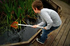 Pond Dipping at Rodley Nature Reserve, Leeds - FREE - local to Pond Dipping, August Bank Holiday, Local Pubs, Pond Ideas, Little Birdie, Nature Reserve, Leeds, Yorkshire, Gardens
