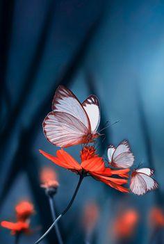 """Motherhood"" ~ Photography by Eleonora Di Primo Raindrops And Roses, Fotografia Macro, Tier Fotos, Chenille, Jolie Photo, Beautiful Butterflies, Macro Photography, Amazing Photography, Travel Photography"