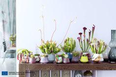 Fleischfressende Pflanzen sind die Zimmerpflanzen des Monats September!