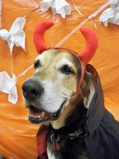 Halloween safety tips for your dogs and cats