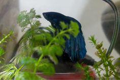 One Life: Meu peixinho vermelho, meu peixinho azul