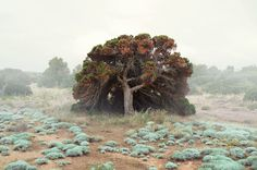 Petros Koublis · Miss Moss Fine Art Photography, Landscape Photography, Desert Photography, Photography Styles, Photography Magazine, Animal Photography, Miss Moss, Colossal Art, Portraits