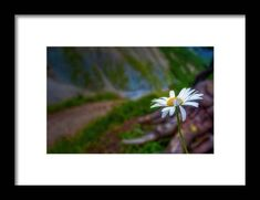 Wall Art For Sale, Northern Italy, Hanging Wire, Clear Acrylic, Fine Art America, Daisy, Travel Photography, Framed Prints, Deep