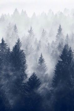 iPhone Wallpaper 5, 6 - Winter Trees Cold Mist