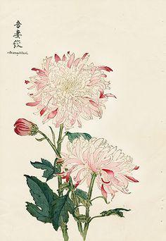 Keika Hasegawa Vintage Japanese Woodblock Prints