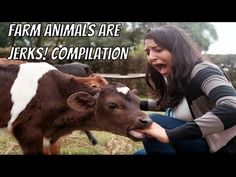 Funny pictures about The Handburger Vengeance. Oh, and cool pics about The Handburger Vengeance. Also, The Handburger Vengeance photos. Haha, Very Funny Gif, Super Funny, Funny Animals, Cute Animals, Farm Animals, Whatsapp Videos, Whatsapp Dp, Humor Grafico