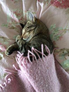 Shhhh...preciousness sleeping. ❤
