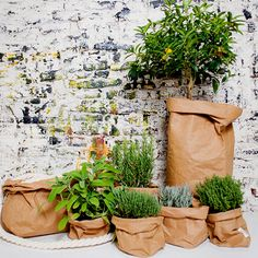 Wil je écht 'lekker' genieten in je #tuin? Bij #Kitchen #Garden Shop vind je spullen voor in je tuin én #keuken en originele artikelen voor het kweken van #groente, #kruiden en fruit.