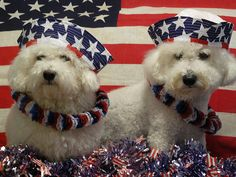 Cats And Dogs Who Love America!
