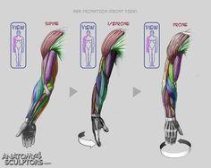 Fotos de Anatomy 4 sculptors https://www.facebook.com/CharacterDesignReferences