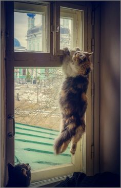 Just hanging in there.<<Fluffy's almost got the window open. The others wait patiently.