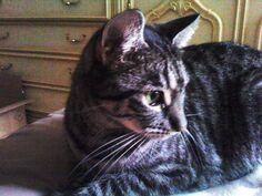 Cicka by Vyamester on DeviantArt Cute Animals, Deviantart, Cats, Pretty Animals, Gatos, Cutest Animals, Cute Funny Animals, Cat, Kitty