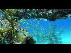 Latest Koh Samui Diving Centers News - http://samui-mega.com/latest-koh-samui-diving-centers-news/