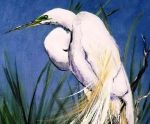 I love this painting of a Great Egret by Charleston's Janie Atkinson.