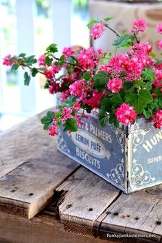 Old biscuit tin, would look great with red geraniums - garden idea
