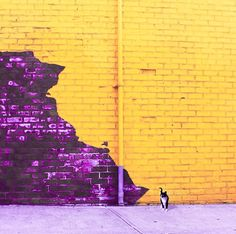 High Contrast Photography, Color Photography, Complimentary Colors, Tumblr Wallpaper, Purple Aesthetic, Color Of Life, Purple Yellow, Color Theory, Violet