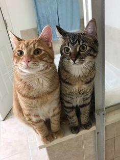 #cat #cats #kittens #catoftheday #kitten