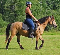 OYY Ceda is the horse you have been looking for! The perfect mare for a family, check her out on Equine.com.